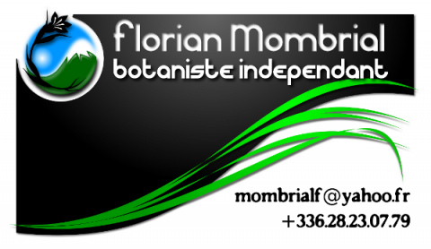 Carte de visite Florian Mombrial