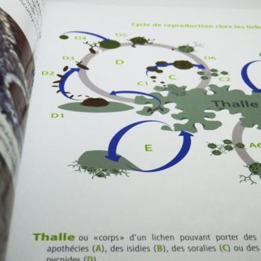 Flore en Ville (lichens)